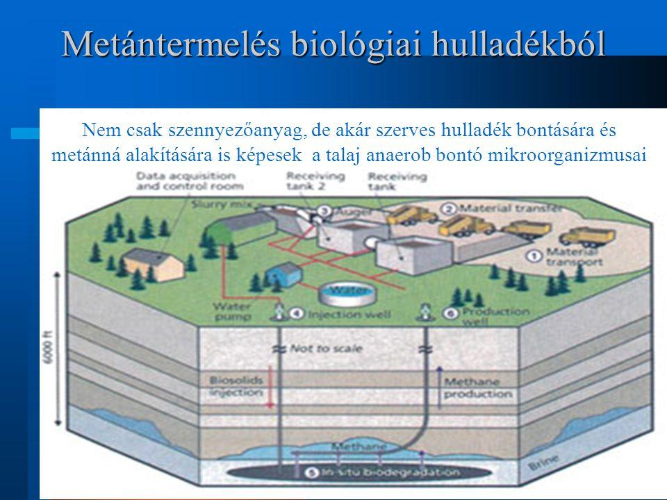 Metántermelés biológiai hulladékból Nem csak szennyezőanyag, de akár szerves hulladék bontására és metánná alakítására is képesek a talaj anaerob bont