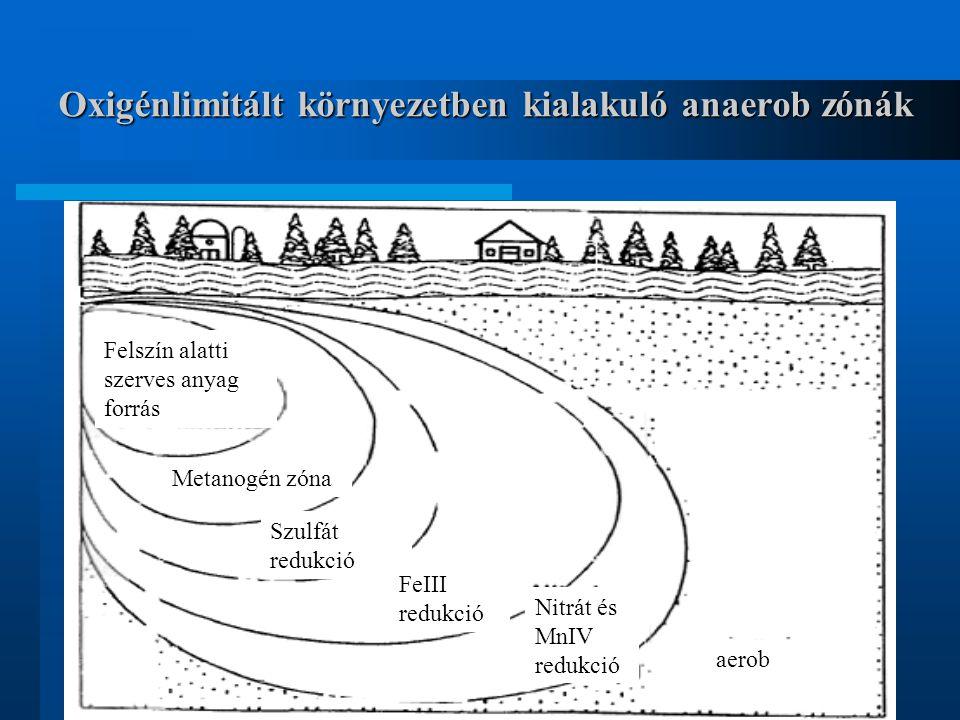 Oxigénlimitált környezetben kialakuló anaerob zónák Felszín alatti szerves anyag forrás Metanogén zóna Szulfát redukció FeIII redukció Nitrát és MnIV