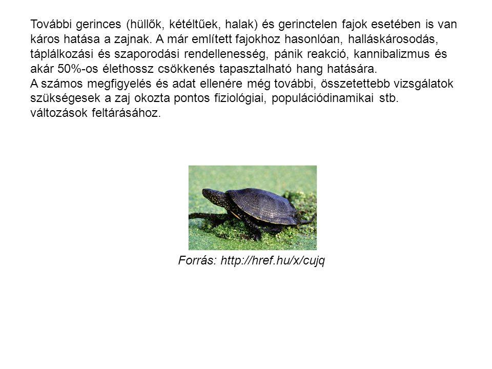 További gerinces (hüllők, kétéltűek, halak) és gerinctelen fajok esetében is van káros hatása a zajnak. A már említett fajokhoz hasonlóan, halláskáros