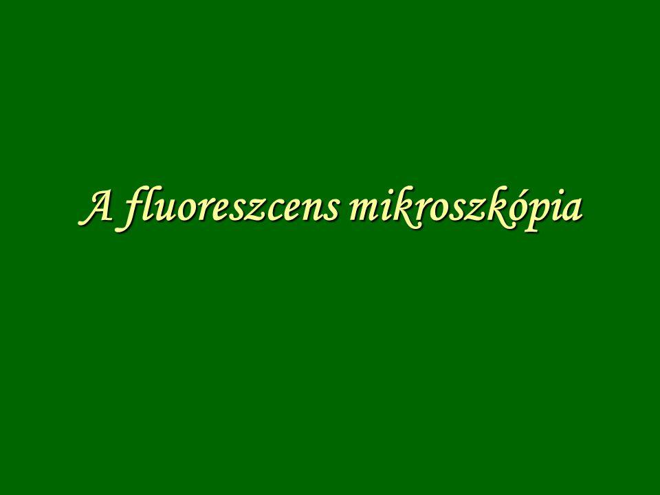Az epi- fluoreszcens mikroszkóp Hg-gőz lámpa Gerjesztő- szűrő zárószűrő dikroikustükör
