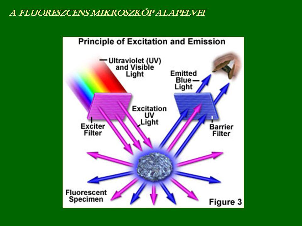 A fluoreszcens mikroszkóp alapelvei