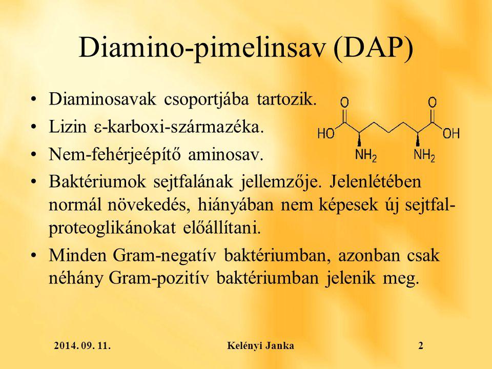 2014. 09. 11. Kelényi Janka2 Diamino-pimelinsav (DAP) Diaminosavak csoportjába tartozik.