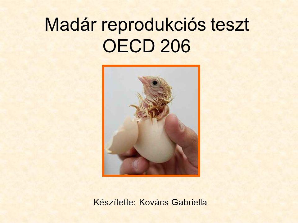 Madár reprodukciós teszt OECD 206 Készítette: Kovács Gabriella