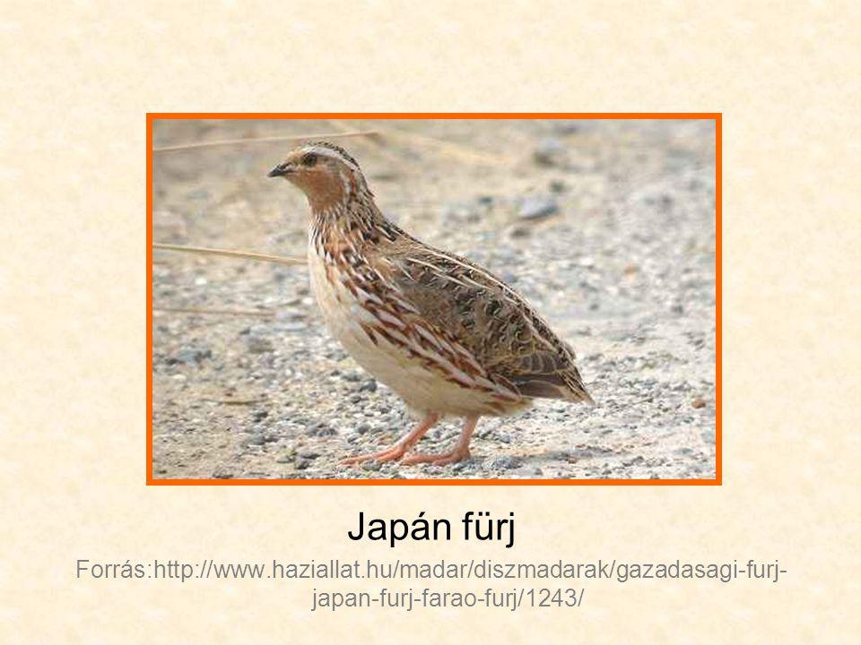 Japán fürj Forrás:http://www.haziallat.hu/madar/diszmadarak/gazadasagi-furj- japan-furj-farao-furj/1243/