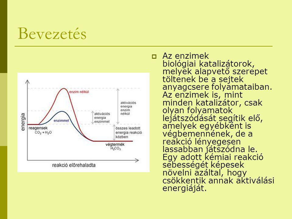 Bevezetés  Az enzimek biológiai katalizátorok, melyek alapvető szerepet töltenek be a sejtek anyagcsere folyamataiban. Az enzimek is, mint minden kat