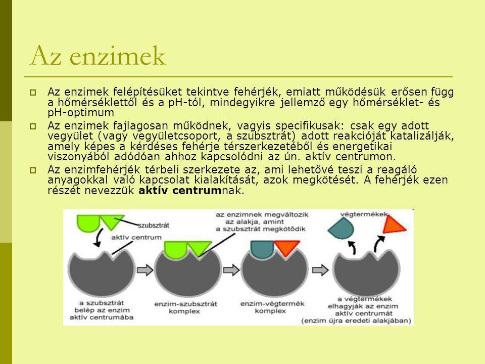 Az enzimek  Az enzimek felépítésüket tekintve fehérjék, emiatt működésük erősen függ a hőmérséklettől és a pH-tól, mindegyikre jellemző egy hőmérséklet- és pH-optimum  Az enzimek fajlagosan működnek, vagyis specifikusak: csak egy adott vegyület (vagy vegyületcsoport, a szubsztrát) adott reakcióját katalizálják, amely képes a kérdéses fehérje térszerkezetéből és energetikai viszonyából adódóan ahhoz kapcsolódni az ún.
