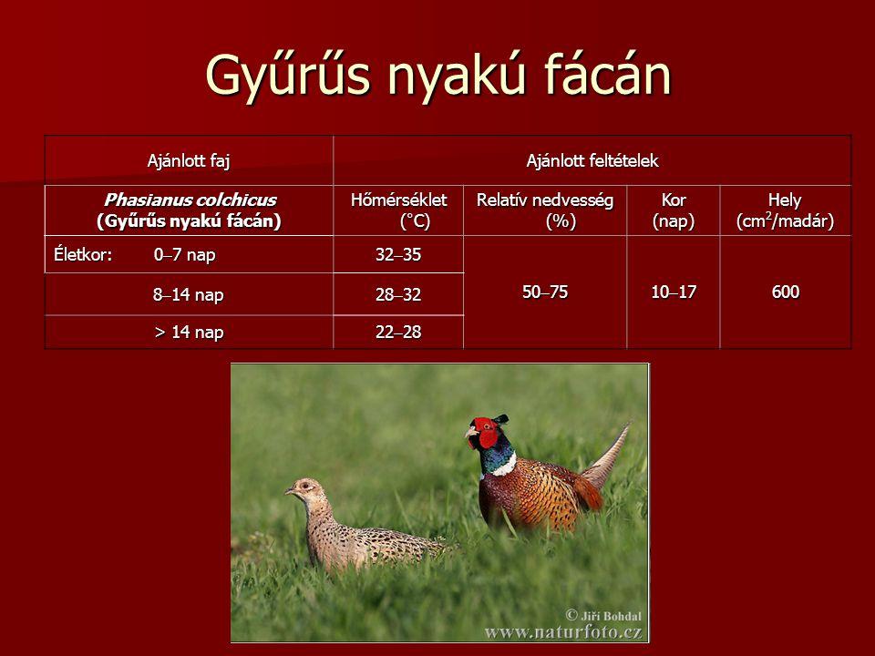 Gyűrűs nyakú fácán Ajánlott faj Ajánlott feltételek Phasianus colchicus (Gyűrűs nyakú fácán) Hőmérséklet (°C) Relatív nedvesség (%) Kor(nap)Hely (cm 2 /madár) Életkor: 0  7 nap 32  35 50  75 10  17 600 8  14 nap 28  32 > 14 nap 22  28