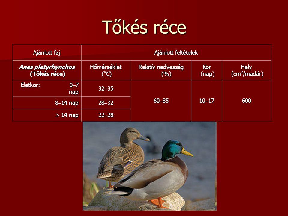 Tőkés réce Ajánlott faj Ajánlott feltételek Anas platyrhynchos (Tőkés réce) (Tőkés réce)Hőmérséklet (°C) (°C) Relatív nedvesség (%) Kor (nap) (nap)Hely (cm 2 /madár) (cm 2 /madár) Életkor: 0  7 nap 32  35 60  85 10  17 600 8  14 nap 28  32 > 14 nap 22  28