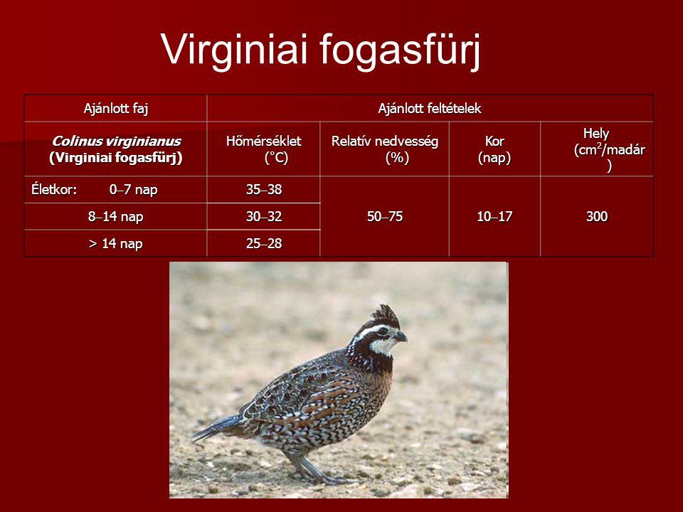 Ajánlott faj Ajánlott feltételek Colinus virginianus (Virginiai fogasfürj) Hőmérséklet (°C) Relatív nedvesség (%) Kor(nap) Hely (cm 2 /madár ) Életkor: 0  7 nap 35  38 50  75 10  17 300 8  14 nap 30  32 > 14 nap 25  28 Virginiai fogasfürj