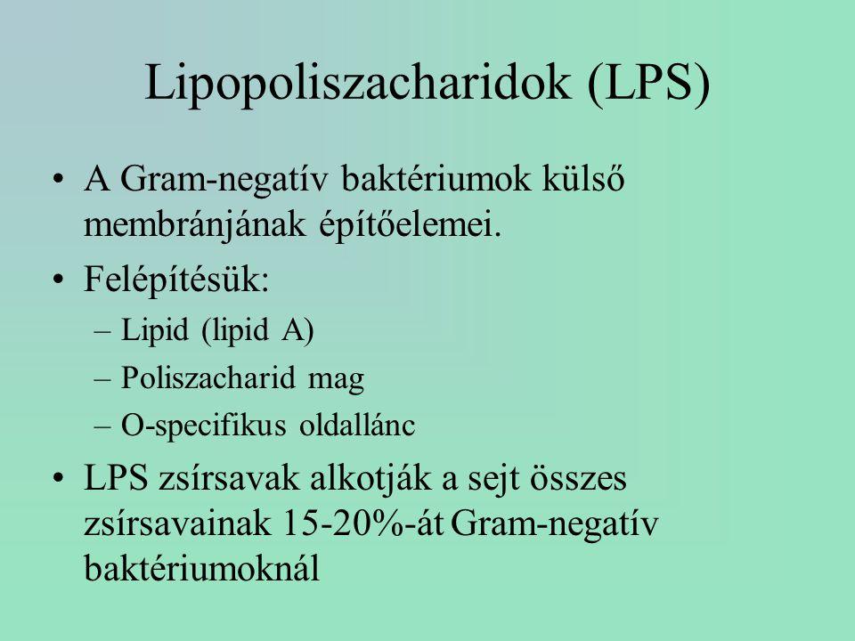 Lipopoliszacharidok (LPS) A Gram-negatív baktériumok külső membránjának építőelemei. Felépítésük: –Lipid (lipid A) –Poliszacharid mag –O-specifikus ol