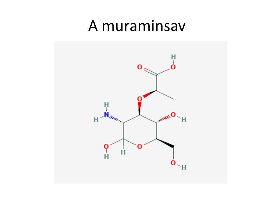 A muraminsav