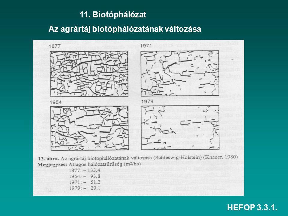 HEFOP 3.3.1. 11. Biotóphálózat Az agrártáj biotóphálózatának változása