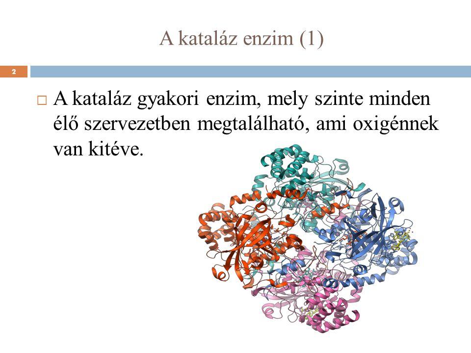 A kataláz enzim (1)  A kataláz gyakori enzim, mely szinte minden élő szervezetben megtalálható, ami oxigénnek van kitéve. 2