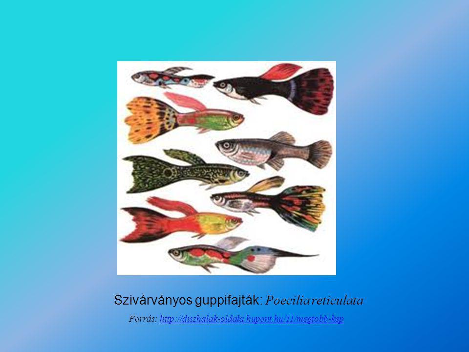 Rizshal és rizshal-embriók: Oryzias latipes Forrás: http://www.biol.s.u-tokyo.ac.jp/users/hassei/English/research%20E/research%20E.htmlhttp://www.biol.s.u-tokyo.ac.jp/users/hassei/English/research%20E/research%20E.html