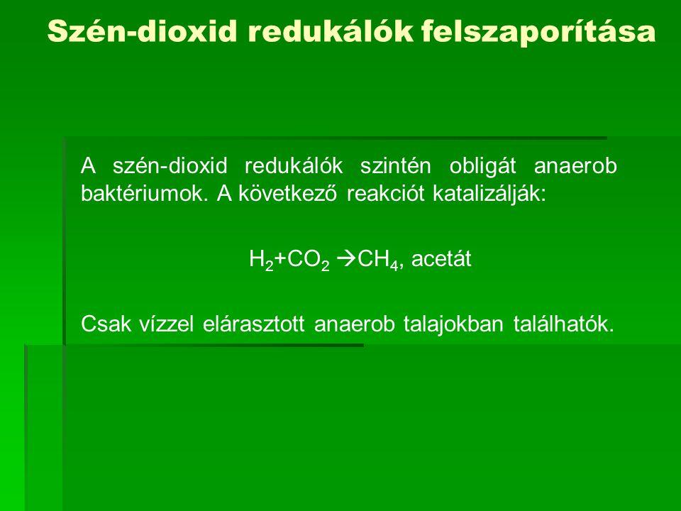 A szén-dioxid redukálók szintén obligát anaerob baktériumok. A következő reakciót katalizálják: H 2 +CO 2  CH 4, acetát Csak vízzel elárasztott anaer