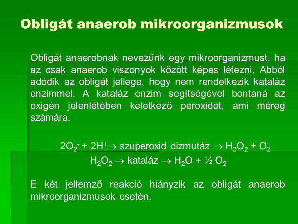 Obligát anaerob mikroorganizmusok Obligát anaerobnak nevezünk egy mikroorganizmust, ha az csak anaerob viszonyok között képes létezni. Abból adódik az