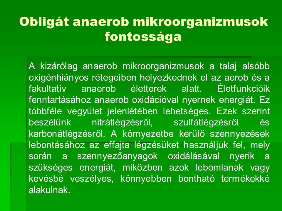 Obligát anaerob mikroorganizmusok fontossága A kizárólag anaerob mikroorganizmusok a talaj alsóbb oxigénhiányos rétegeiben helyezkednek el az aerob és a fakultatív anaerob életterek alatt.