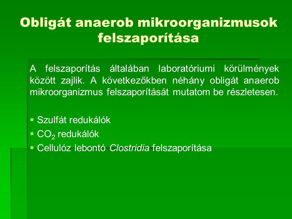 Szulfát redukálók felszaporítása A szulfát redukálók obligát anaerob baktériumok, melyek az anaerob talajban és vízben fordulnak elő.