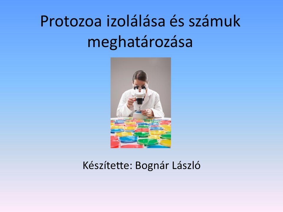 Protozoa izolálása és számuk meghatározása Készítette: Bognár László