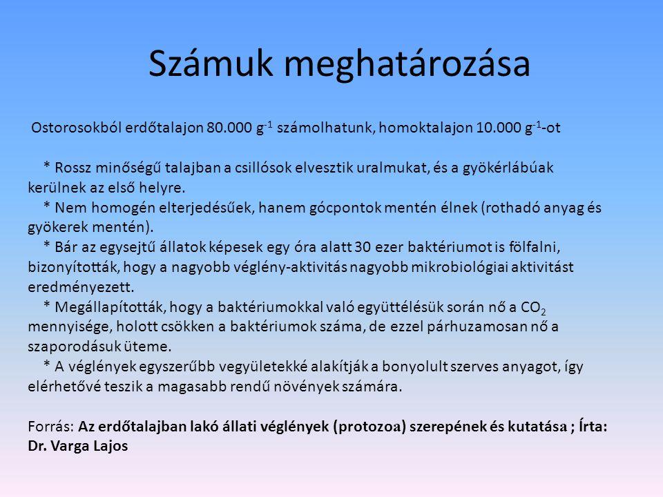 Számuk meghatározása Ostorosokból erdőtalajon 80.000 g -1 számolhatunk, homoktalajon 10.000 g -1 -ot * Rossz minőségű talajban a csillósok elvesztik u