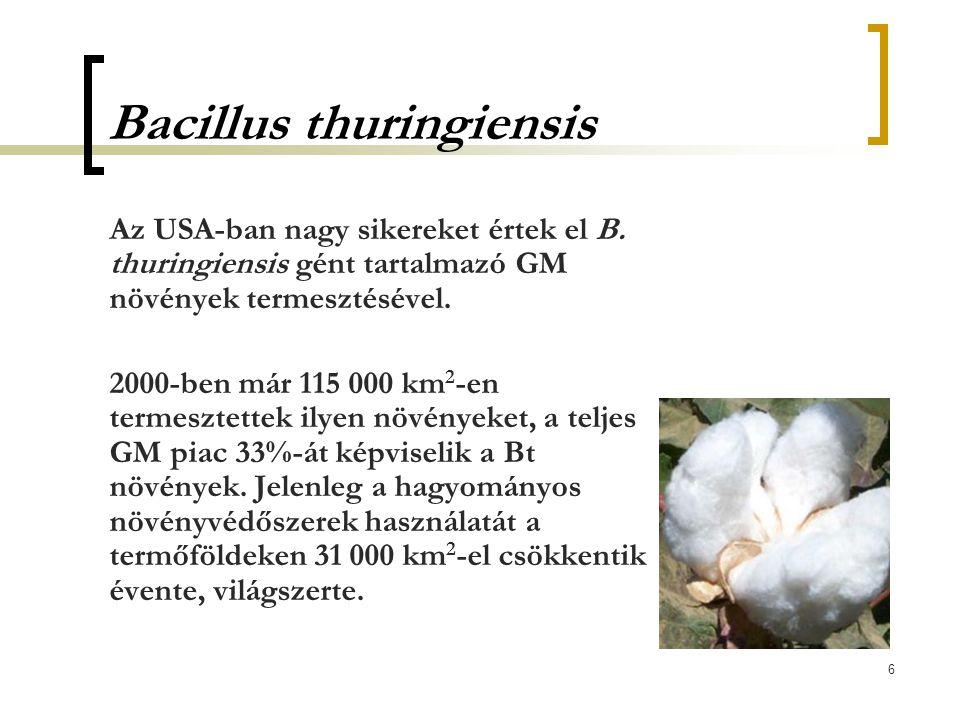 6 Bacillus thuringiensis Az USA-ban nagy sikereket értek el B. thuringiensis gént tartalmazó GM növények termesztésével. 2000-ben már 115 000 km 2 -en
