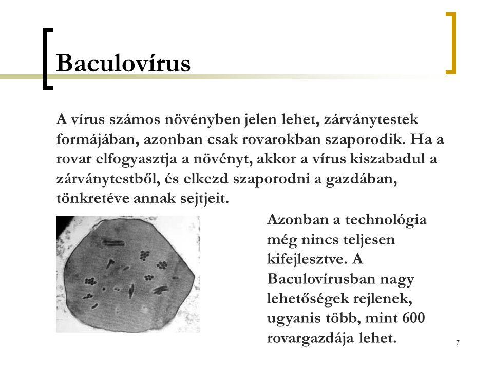 7 Baculovírus A vírus számos növényben jelen lehet, zárványtestek formájában, azonban csak rovarokban szaporodik. Ha a rovar elfogyasztja a növényt, a