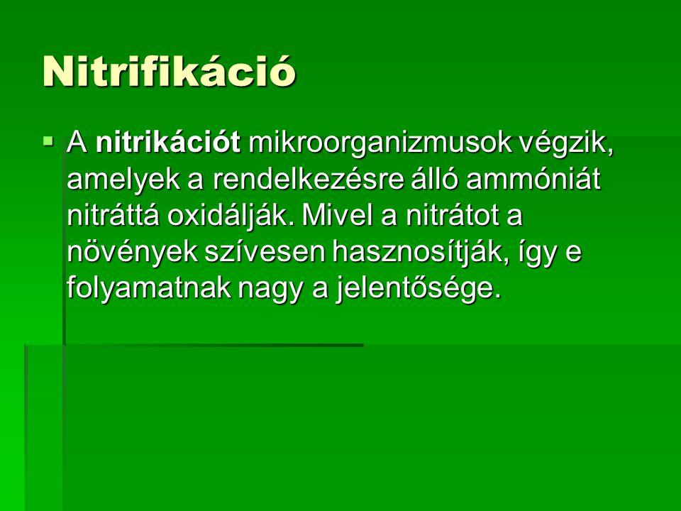Nitrifikáció  A nitrikációt mikroorganizmusok végzik, amelyek a rendelkezésre álló ammóniát nitráttá oxidálják. Mivel a nitrátot a növények szívesen