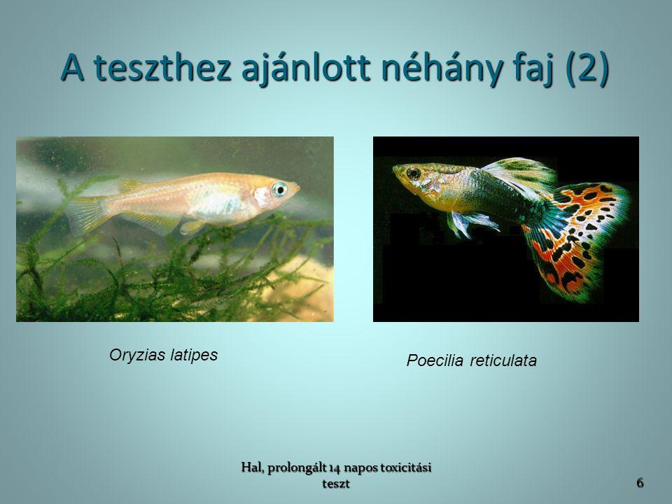 Megfigyelések Megfigyelt adatok:   pusztulás: a hal élettelen, ha érintésre nem reagál (naponta ellenőrizni kell)   egyéb elváltozások:   méretbeli elváltozás (tömeg, méret)   eltérő úszó mozgás   eltérő válaszreakció a külső ingerekre   táplálékfelvétel csökkenése/megszűnése Vizsgálat kezdete előtt fel kell jegyezni a halak méretét és tömegét.