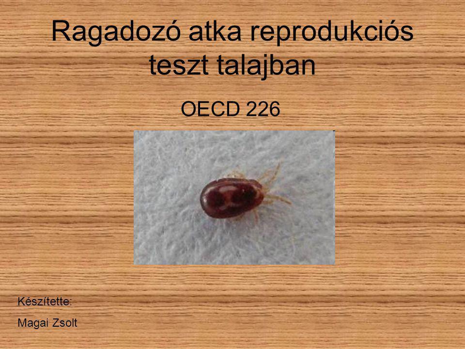 Ragadozó atka reprodukciós teszt talajban OECD 226 Készítette: Magai Zsolt