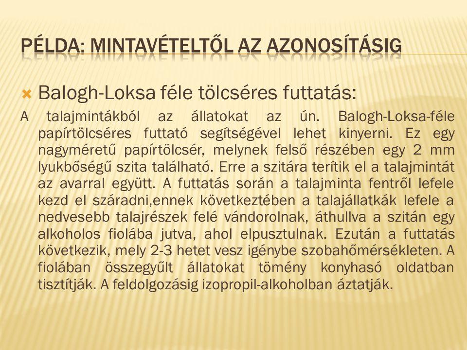  Balogh-Loksa féle tölcséres futtatás: A talajmintákból az állatokat az ún.