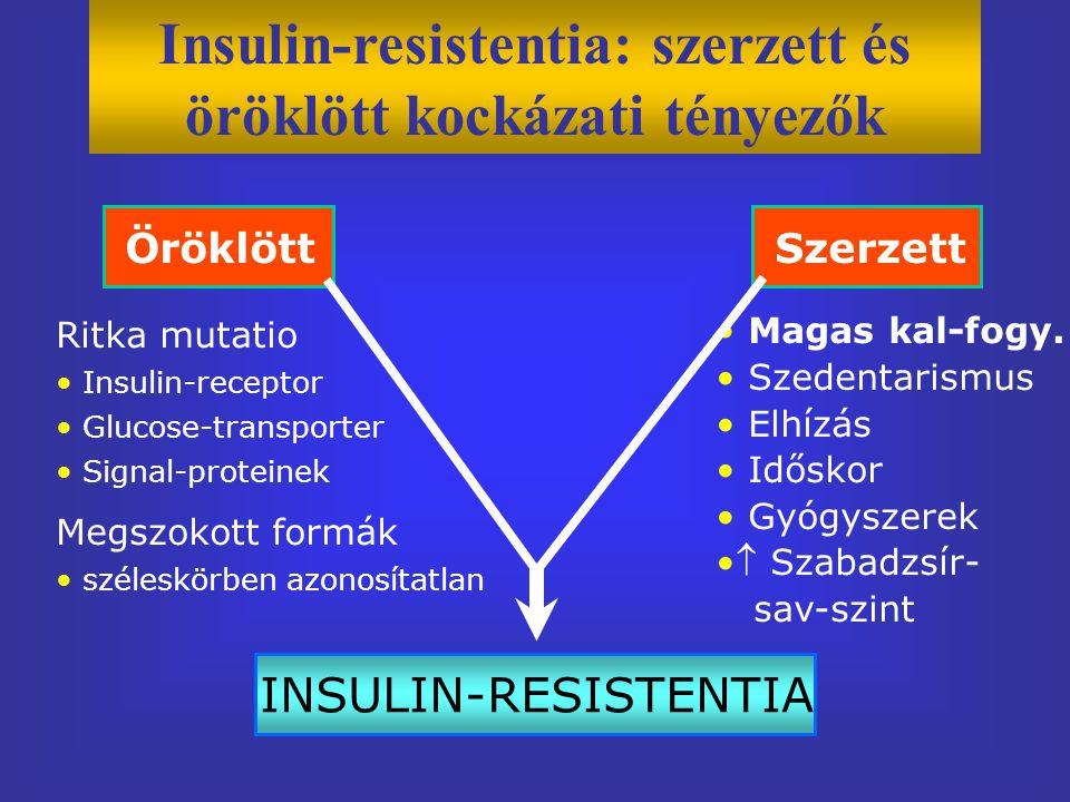 Ritka mutatio Insulin-receptor Glucose-transporter Signal-proteinek Megszokott formák széleskörben azonosítatlan Magas kal-fogy.
