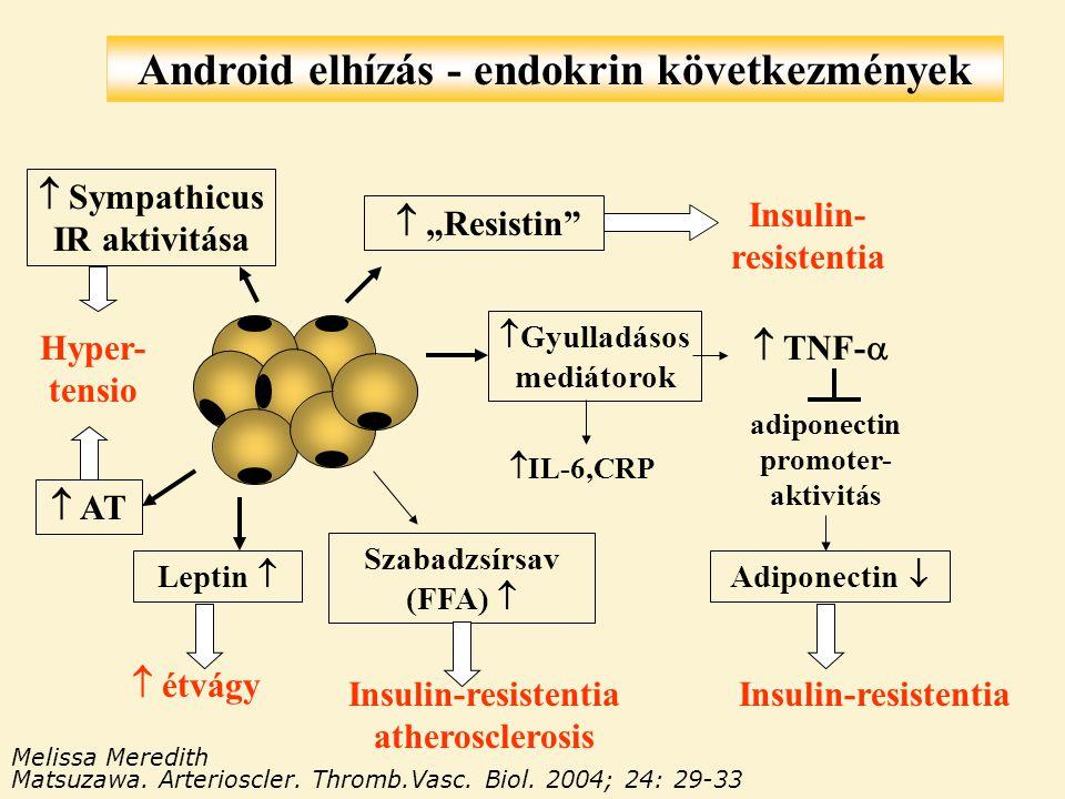 """Android elhízás - endokrin következmények Insulin-resistentia Melissa Meredith Matsuzawa. Arterioscler. Thromb.Vasc. Biol. 2004; 24: 29-33  """"Resistin"""