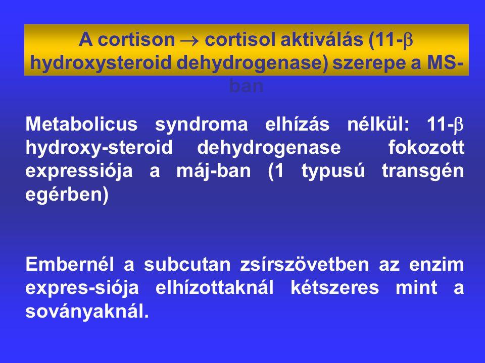 A cortison  cortisol aktiválás (11-  hydroxysteroid dehydrogenase) szerepe a MS- ban Metabolicus syndroma elhízás nélkül: 11-  hydroxy-steroid dehydrogenase fokozott expressiója a máj-ban (1 typusú transgén egérben) Embernél a subcutan zsírszövetben az enzim expres-siója elhízottaknál kétszeres mint a soványaknál.