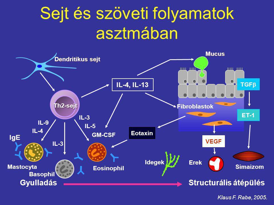 Sejt és szöveti folyamatok asztmában IL-9 IL-4 IL-3 GM-CSF IL-5 IL-3 Basophil Mastocyta Eosinophil Gyulladás Th2-sejt Dendritikus sejt IL-4, IL-13 Mucus Structurális átépülés TGF  ET-1 VEGF Eotaxin Fibroblastok Simaizom Erek Idegek IgE Klaus F.