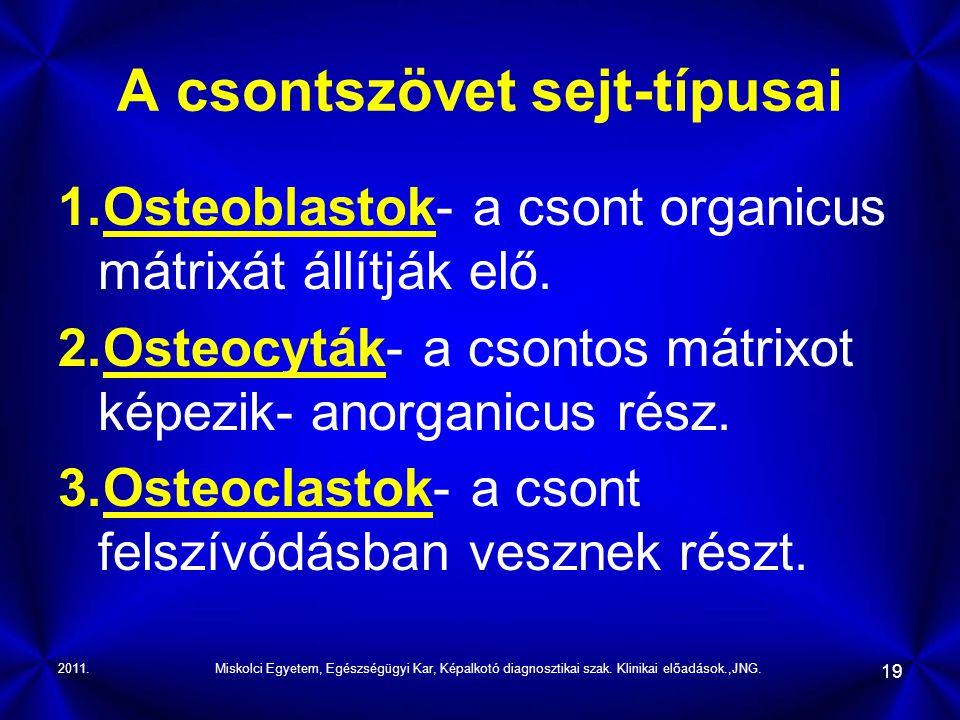 2011.Miskolci Egyetem, Egészségügyi Kar, Képalkotó diagnosztikai szak. Klinikai előadások.,JNG. 19 A csontszövet sejt-típusai 1.Osteoblastok- a csont