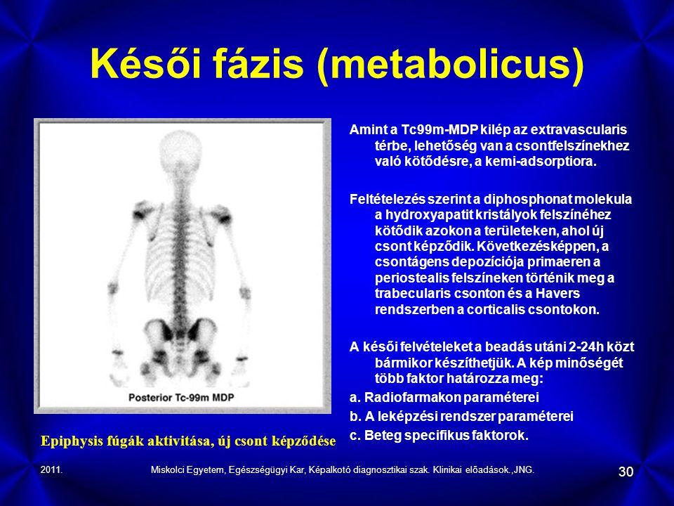 2011.Miskolci Egyetem, Egészségügyi Kar, Képalkotó diagnosztikai szak. Klinikai előadások.,JNG. 30 Késői fázis (metabolicus) Amint a Tc99m-MDP kilép a