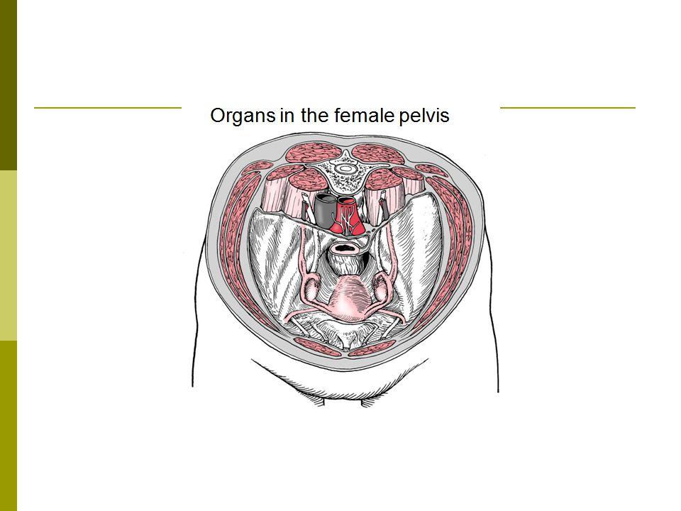 Wide anterior, narrow posterior field