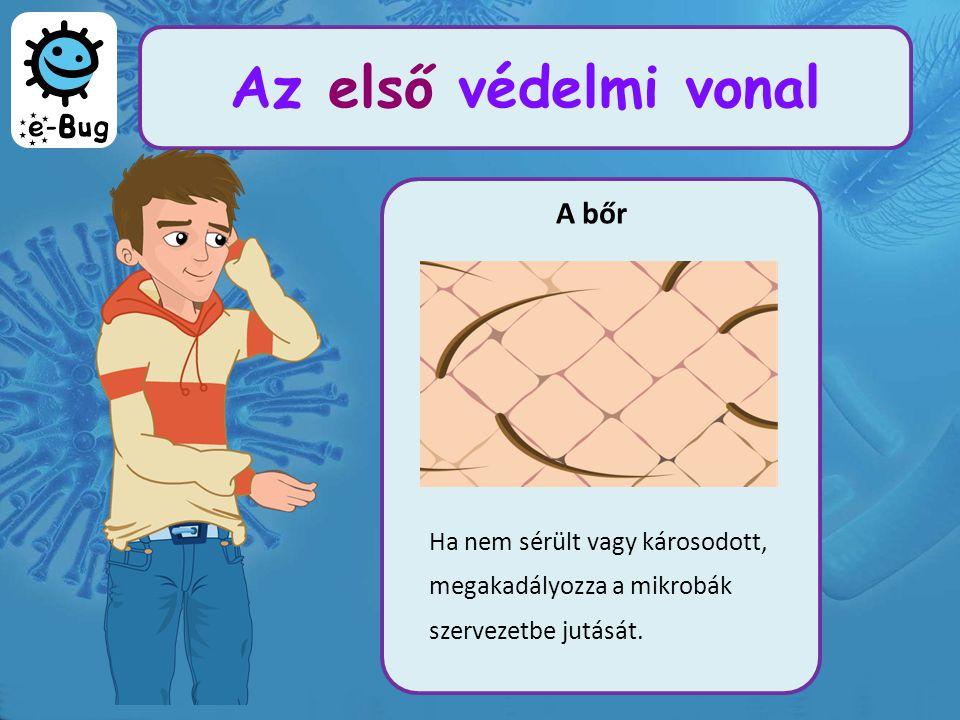 Az első védelmi vonal A bőr Ha nem sérült vagy károsodott, megakadályozza a mikrobák szervezetbe jutását.