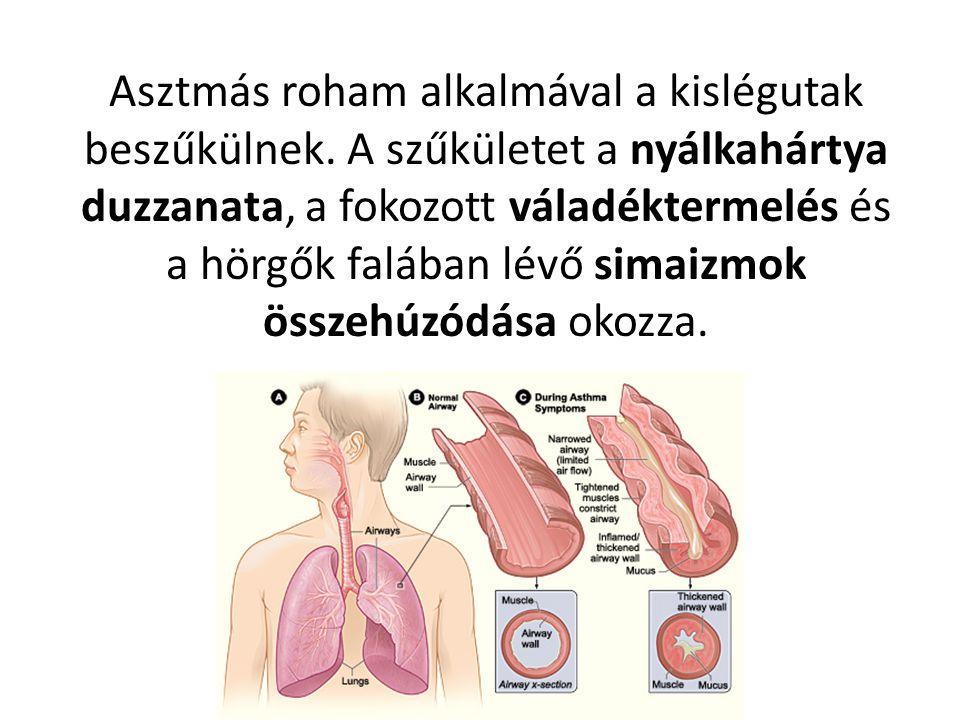 Asztmás roham alkalmával a kislégutak beszűkülnek.