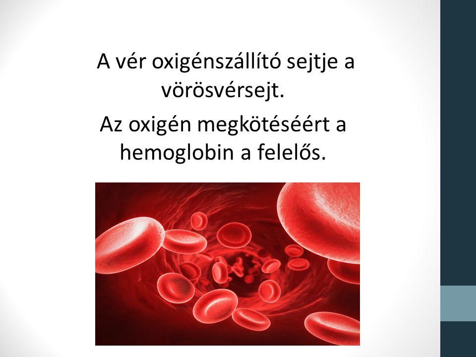 A vér oxigénszállító sejtje a vörösvérsejt. Az oxigén megkötéséért a hemoglobin a felelős.