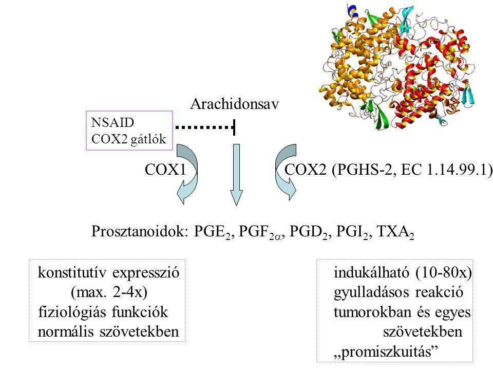 Arachidonsav Prosztanoidok: PGE 2, PGF 2 , PGD 2, PGI 2, TXA 2 COX1COX2 (PGHS-2, EC 1.14.99.1) NSAID COX2 gátlók konstitutív expresszió indukálható (