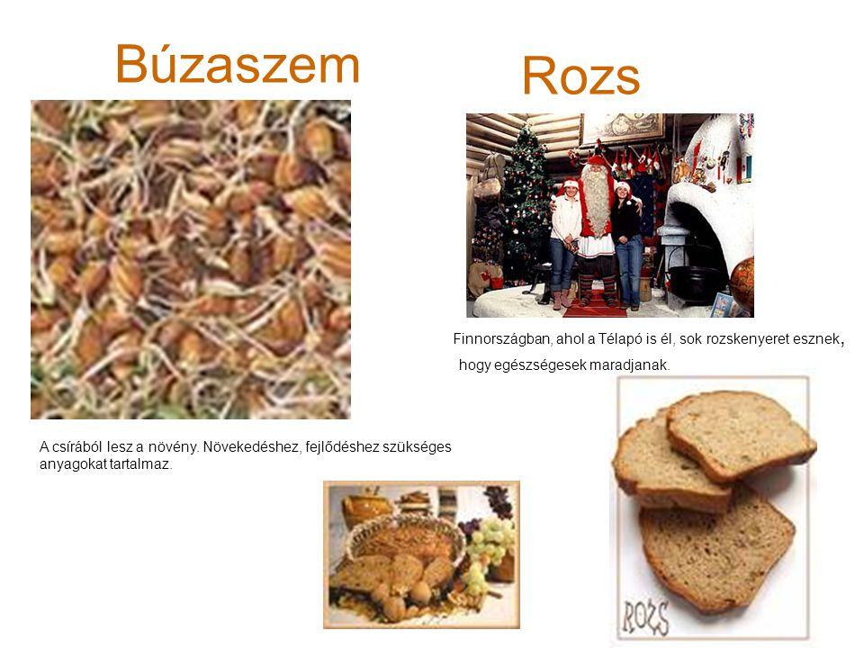 Búzaszem Rozs Finnországban, ahol a Télapó is él, sok rozskenyeret esznek, hogy egészségesek maradjanak. A csírából lesz a növény. Növekedéshez, fejlő