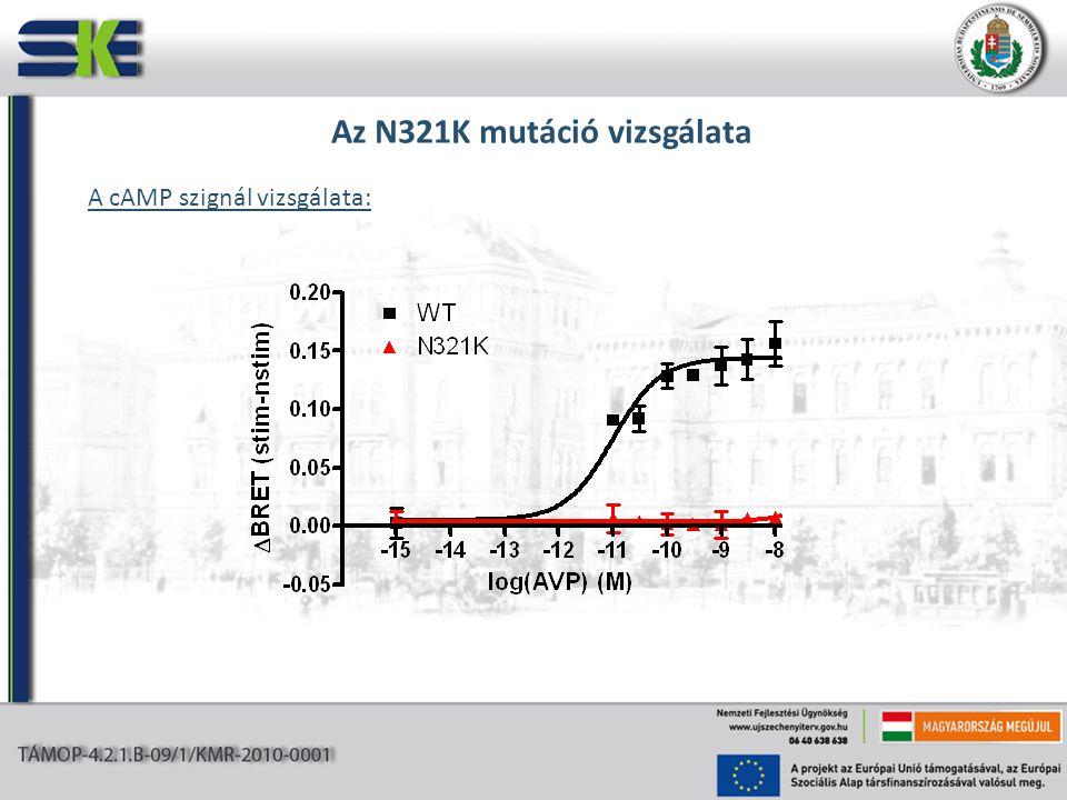 Az N321K mutáció vizsgálata A cAMP szignál vizsgálata: