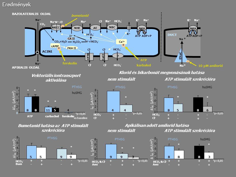 * p<0,05 HCO 3 - + + 0 2 4 6 8 PTHSG 44 I sc (µA/cm 2 ) ATPcarbachol forskolin 0 2 4 6 8 118854 PTHSG huSMG ∆I sc (µA/cm 2 ) * * p<0,05 vs baseline *
