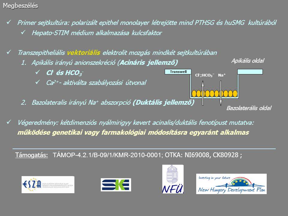 Primer sejtkultúra: polarizált epithel monolayer létrejötte mind PTHSG és huSMG kultúrából Hepato-STIM médium alkalmazása kulcsfaktor Transzepitheliál
