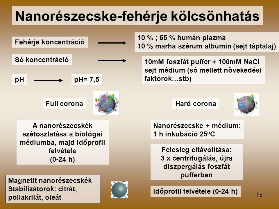15 Nanorészecske-fehérje kölcsönhatás Fehérje koncentráció Só koncentráció pH 10 % ; 55 % humán plazma 10 % marha szérum albumin (sejt táptalaj) 10mM foszfát puffer + 100mM NaCl sejt médium (só mellett növekedési faktorok…stb) pH= 7,5 Full coronaHard corona A nanorészecskék szétoszlatása a biológai médiumba, majd időprofil felvétele (0-24 h) Nanorészecske + médium: 1 h inkubáció 25 o C Felesleg eltávolítása: 3 x centrifugálás, újra diszpergálás foszfát pufferben Időprofil felvétele (0-24 h) Magnetit nanorészecskék Stabilizátorok: citrát, poliakrilát, oleát