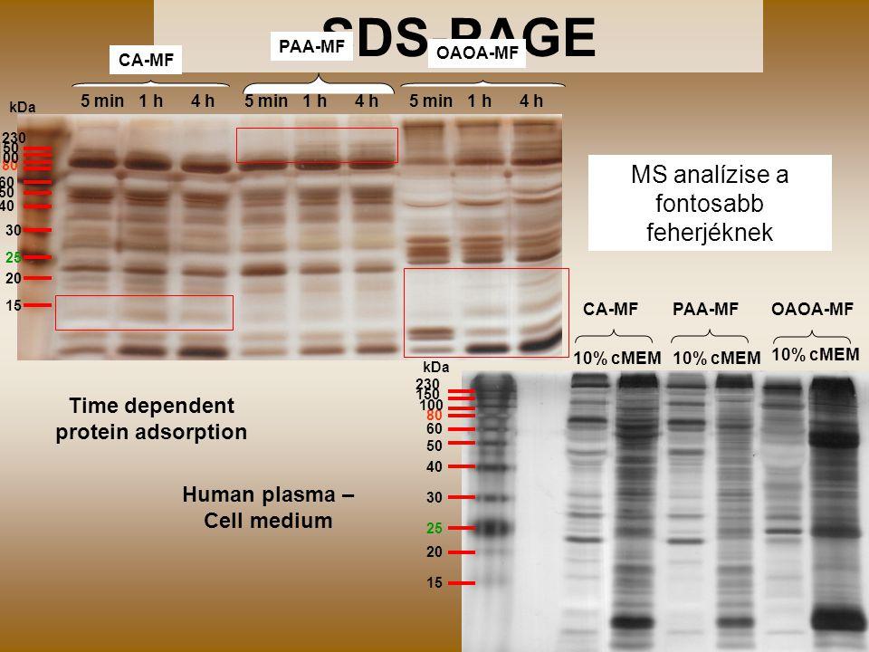 21 SDS-PAGE CA-MFOAOA-MFPAA-MF 10% cMEM 25 50 40 30 80 60 20 15 230 150 100 kDa CA-MF OAOA-MF PAA-MF 5 min 1 h 4 h 25 50 40 30 80 20 15 230 150 100 kDa 60 Time dependent protein adsorption Human plasma – Cell medium MS analízise a fontosabb feherjéknek