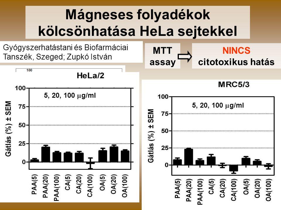 7 Gyógyszerhatástani és Biofarmáciai Tanszék, Szeged; Zupkó István Mágneses folyadékok kölcsönhatása HeLa sejtekkel MTT assay NINCS citotoxikus hatás 5, 20, 100  g/ml