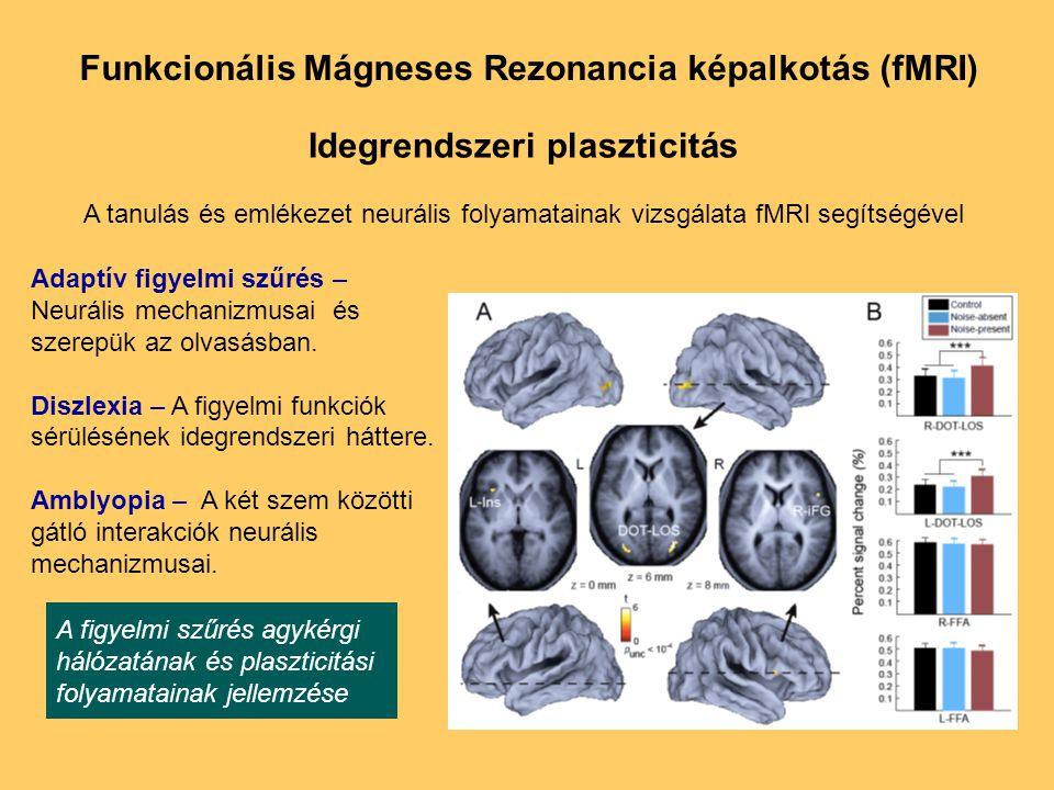 Idegrendszeri plaszticitás A tanulás és emlékezet neurális folyamatainak vizsgálata fMRI segítségével A figyelmi szűrés agykérgi hálózatának és plaszticitási folyamatainak jellemzése Adaptív figyelmi szűrés – Neurális mechanizmusai és szerepük az olvasásban.