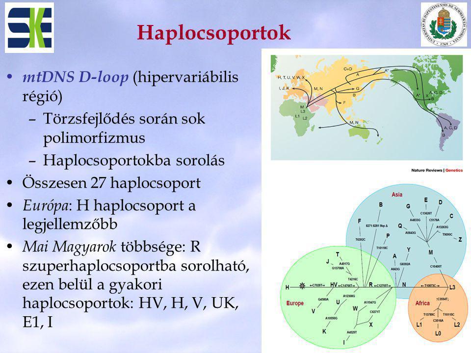 Haplocsoportok mtDNS D-loop (hipervariábilis régió) –Törzsfejlődés során sok polimorfizmus –Haplocsoportokba sorolás Összesen 27 haplocsoport Európa :